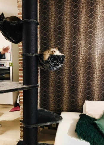 joyce wong maine coon tower blackline dark grey