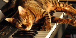 De kat en de muziek