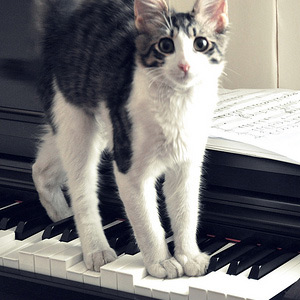 Naar: Kat en muziek