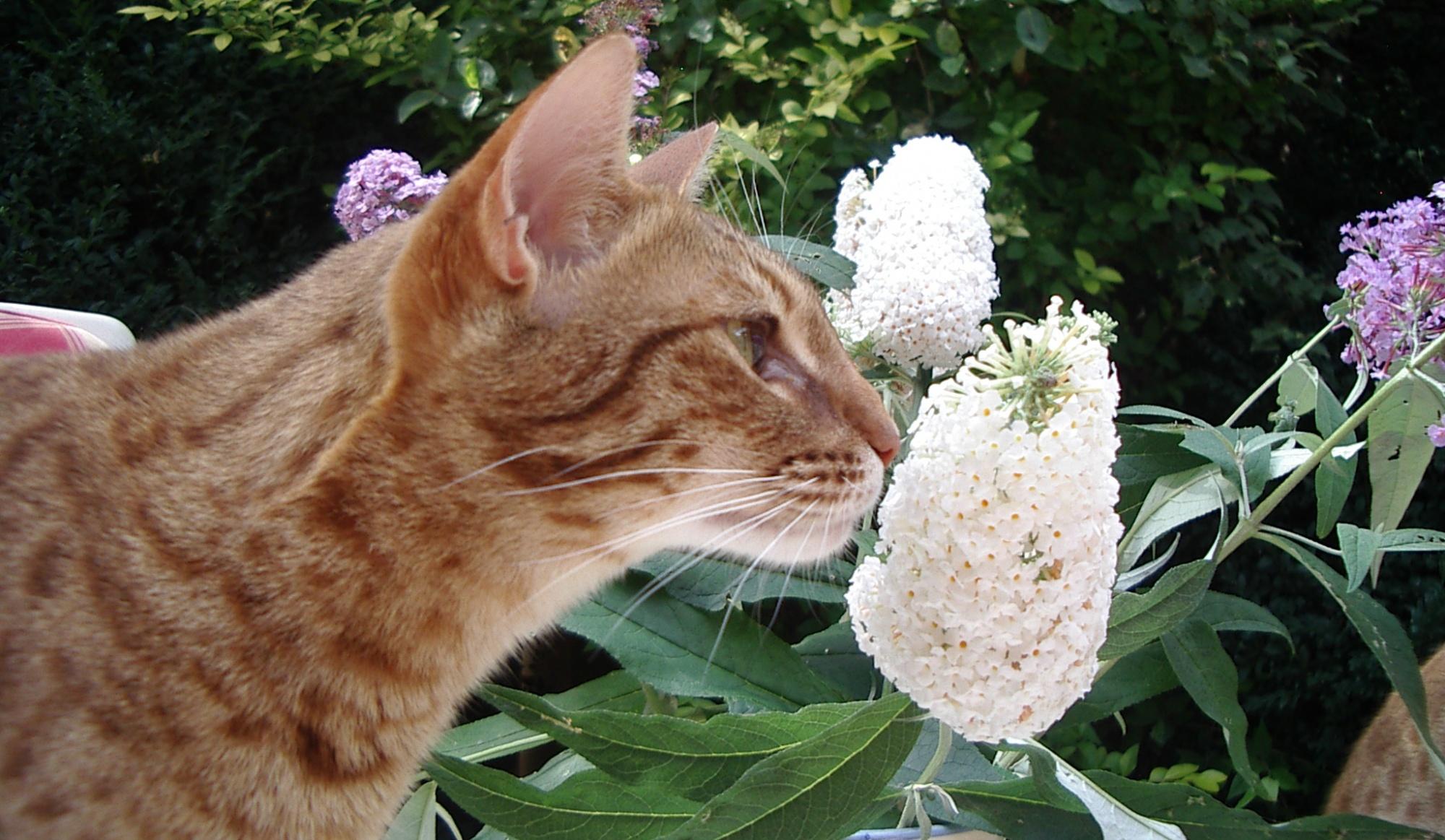 Krabmeubelen Kattenzorg